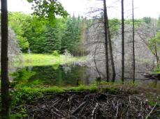 2014.09 Obóz Klasztor7 - tama bobrowa